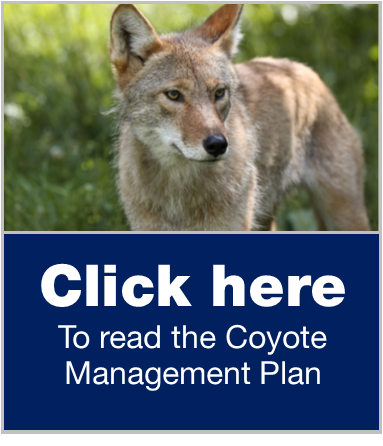 coyote management plan