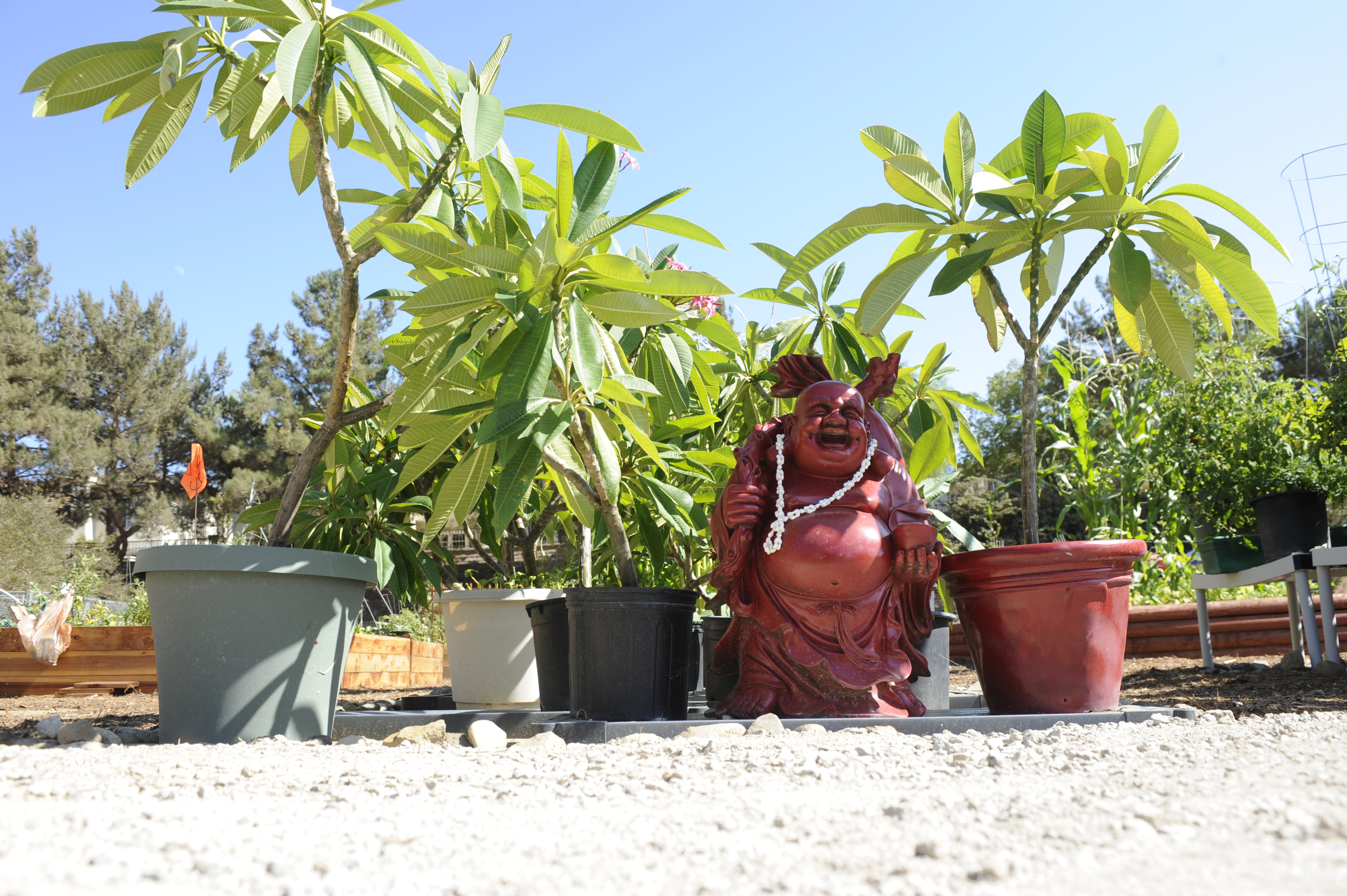Small red buda sitting next to some plants waiting to be placed in a garden plot