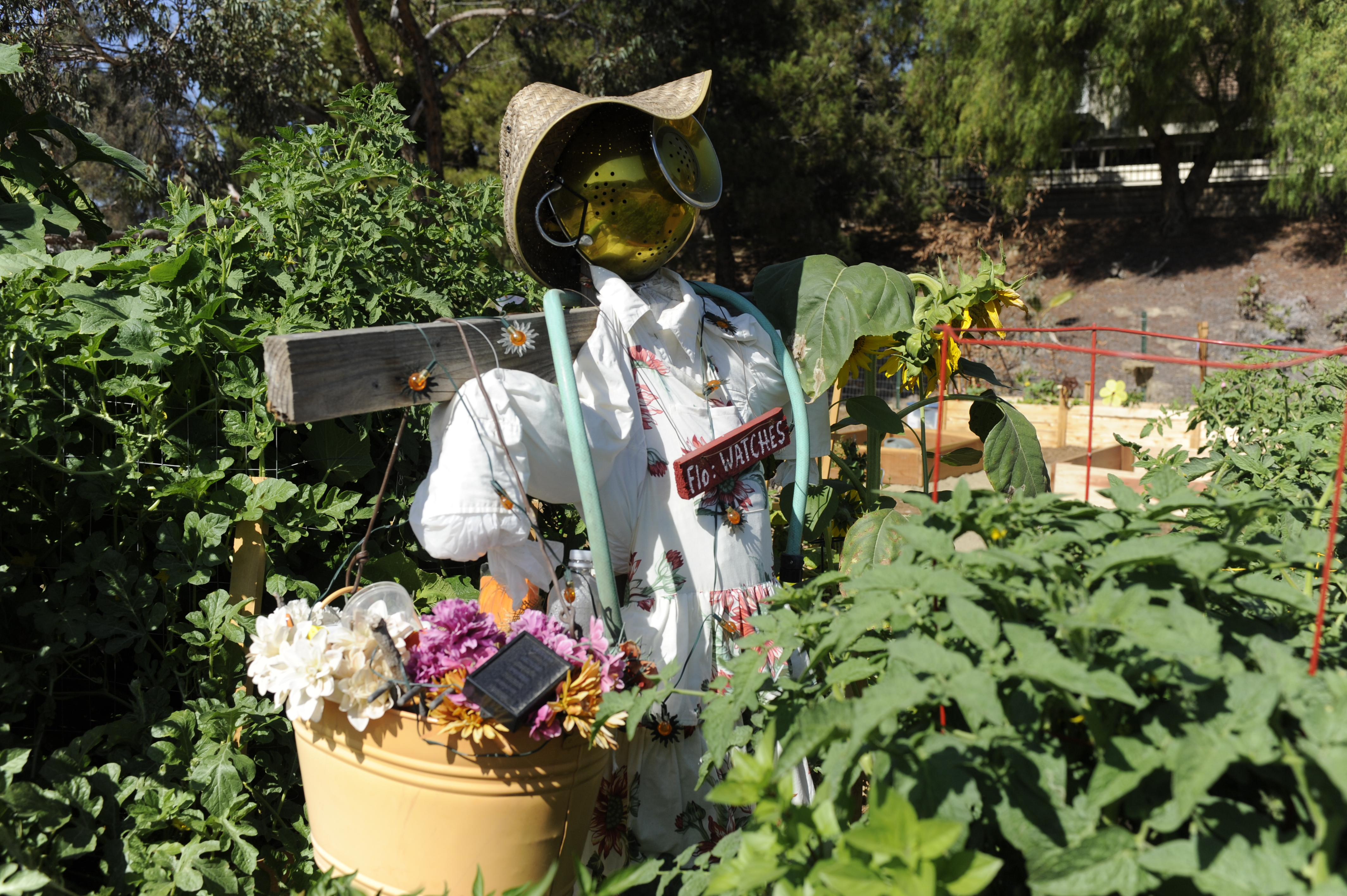 Large scarecrow in the middle of the garden plot