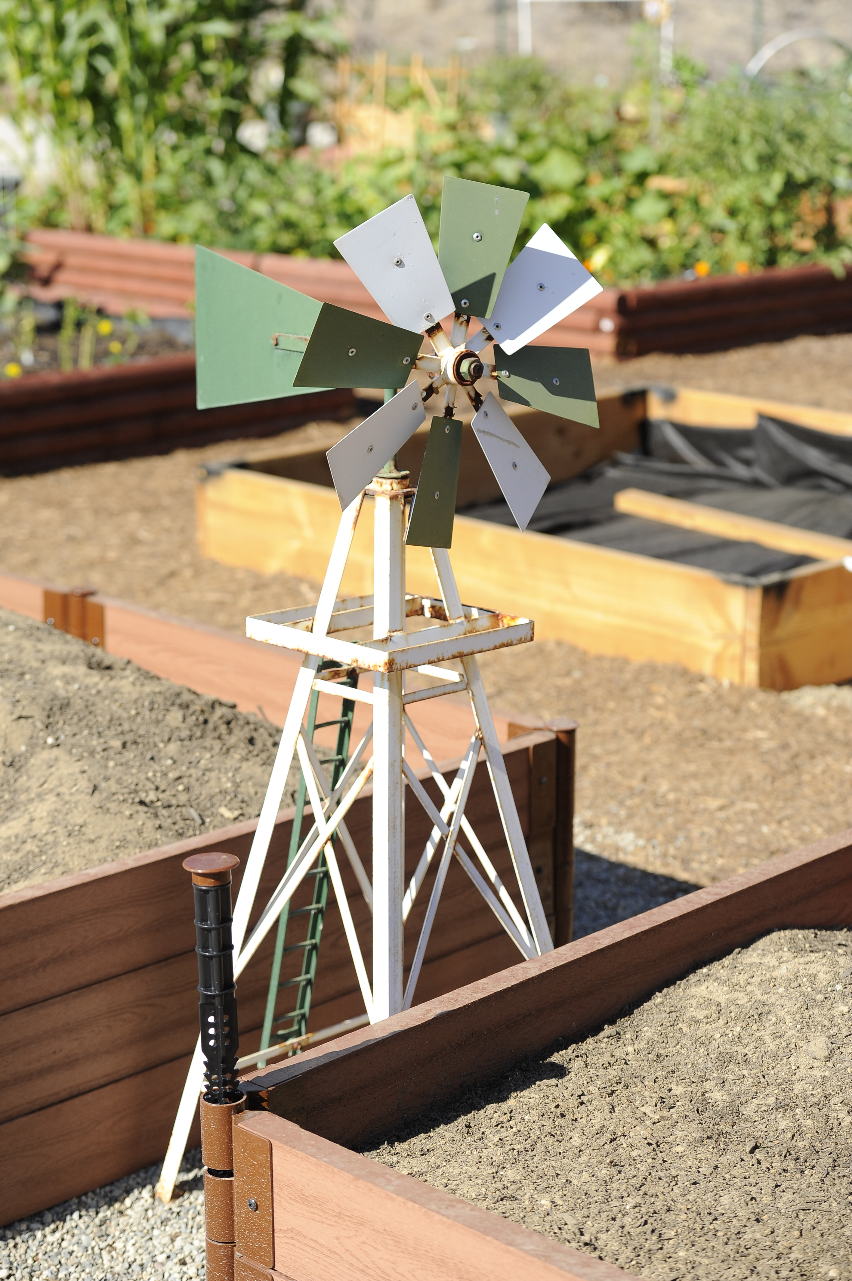 Metal windmill standing in between 2 garden plots