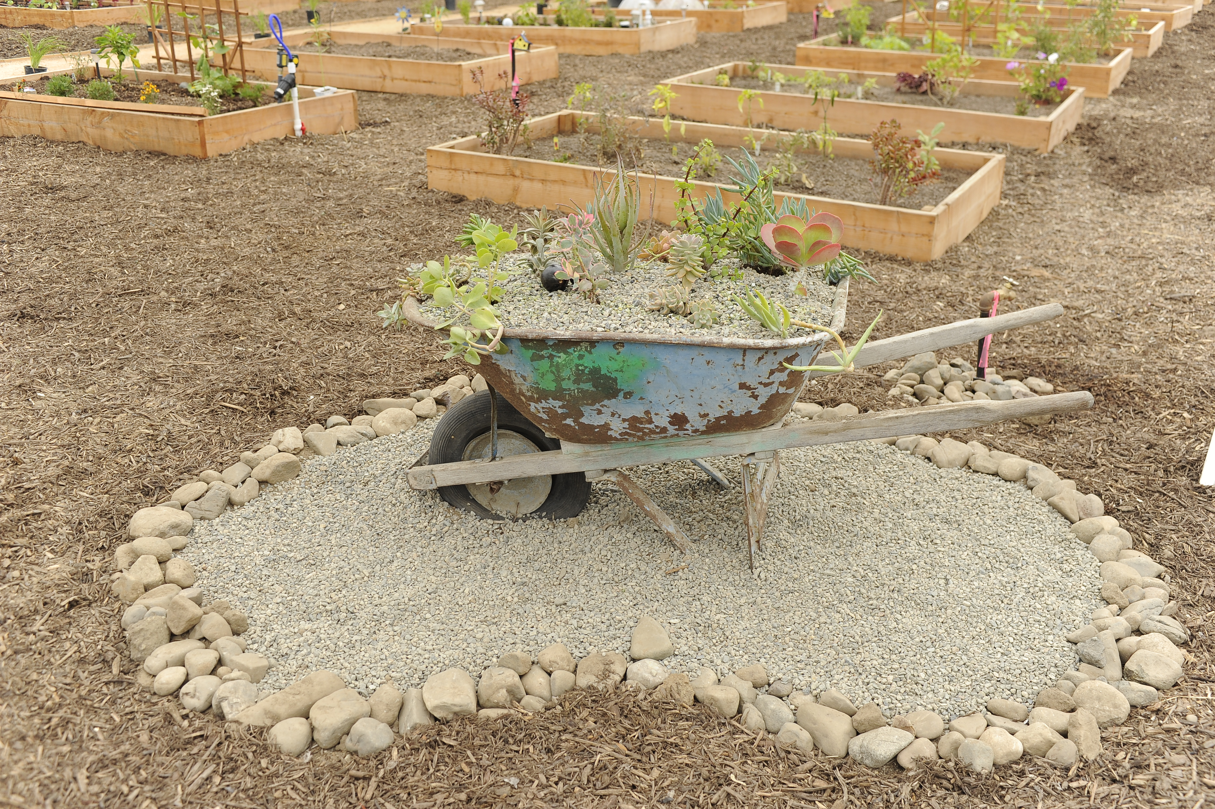 A wheel barrel in the middle of a small rock garden