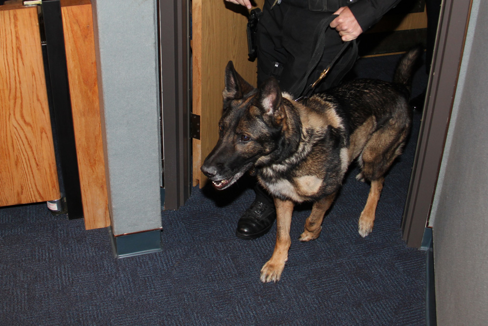 Police dog walking in to the room