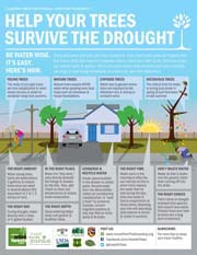 Help Your Trees Survive the Drought flyer with house and trees