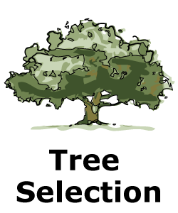 "Drawing of tree with text ""Tree Selection"""