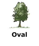 Drawing of oval tree type