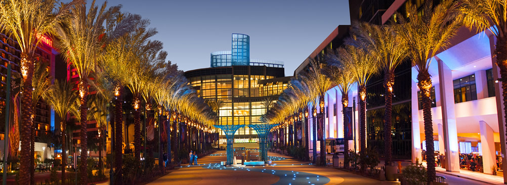 Convention Center lighted walk way with palm trees on both sides of the sidewalk
